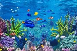 Quels sont les types de filtration pour l'aquarium d'eau douce ?