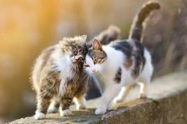 Le chat : choisir un mâle ou une femelle ?
