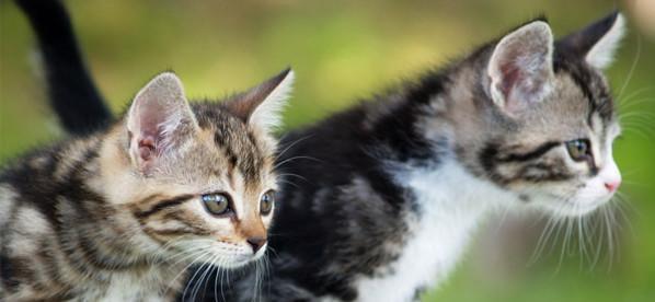 deux chattons de gouttière