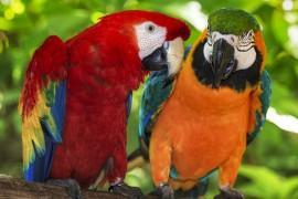 Comment apprendre à son perroquet à parler ?