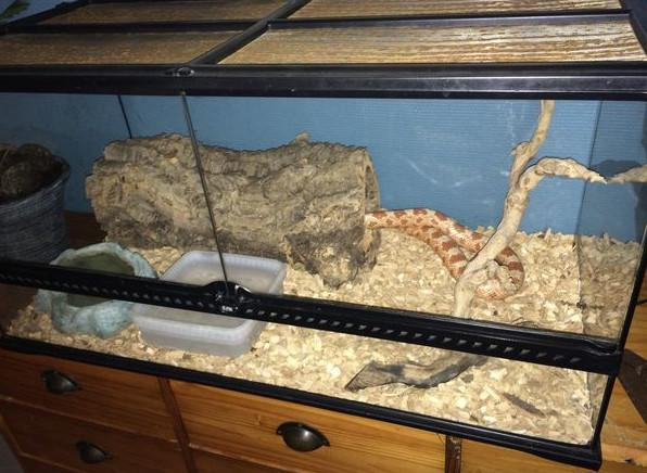 terrarium pour serpent