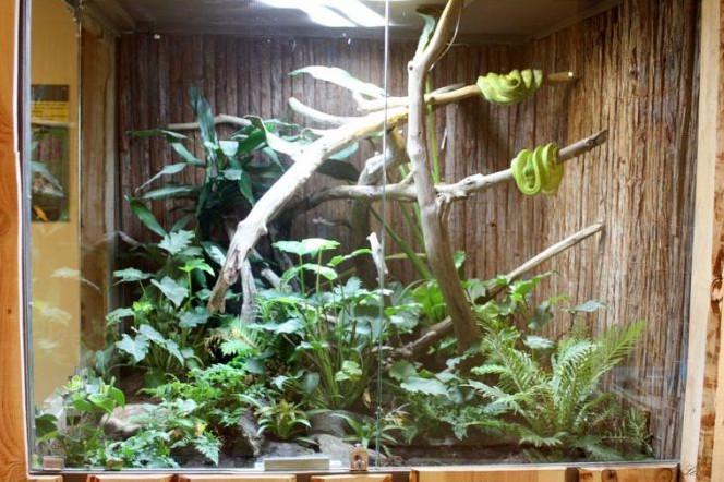 terrarium pour serpent quoi faut il penser webonosaure. Black Bedroom Furniture Sets. Home Design Ideas