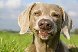 Gastrite, vomissement, diarrhée : votre chien est-il malade ?