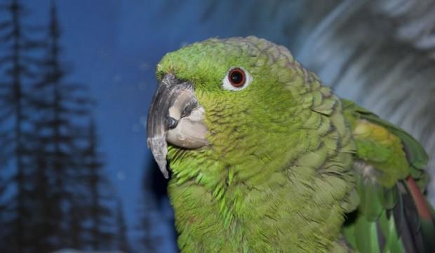 Faut-il tailler le bec de votre oiseau ?