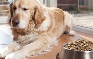 perte d'appétit du chien
