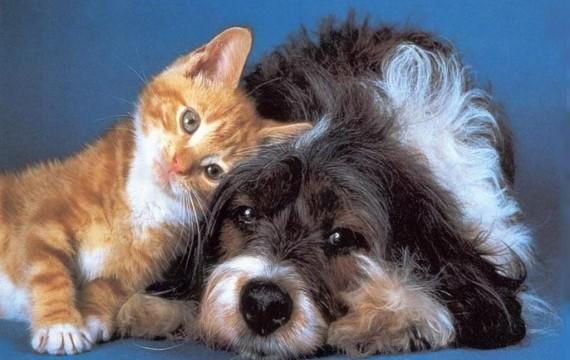Quelles sont les différences entre le chien et le chat ?