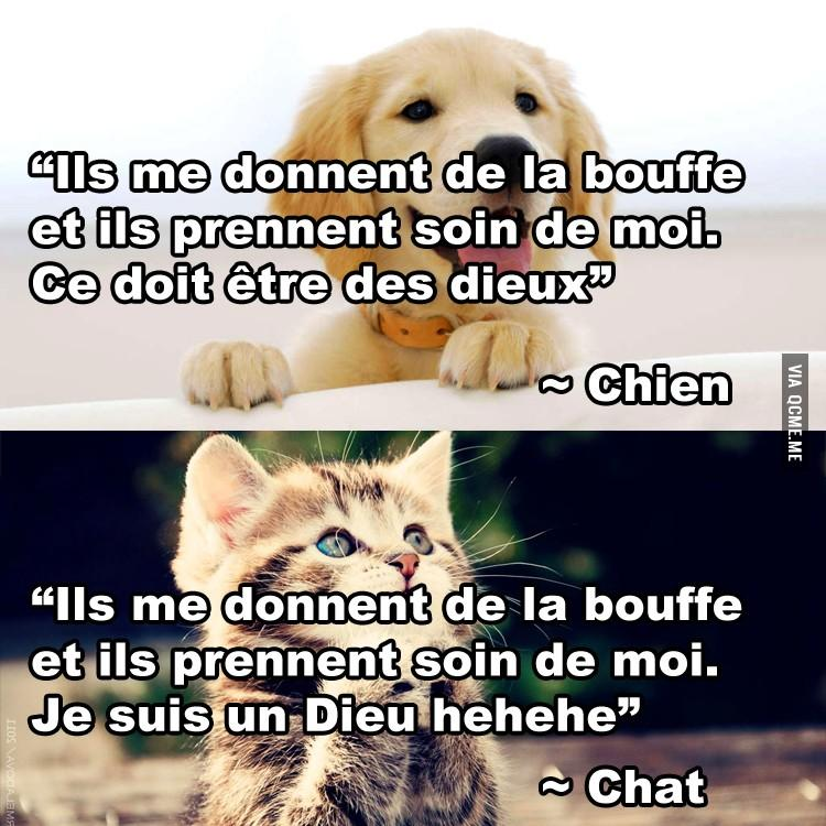 différences chiens chats