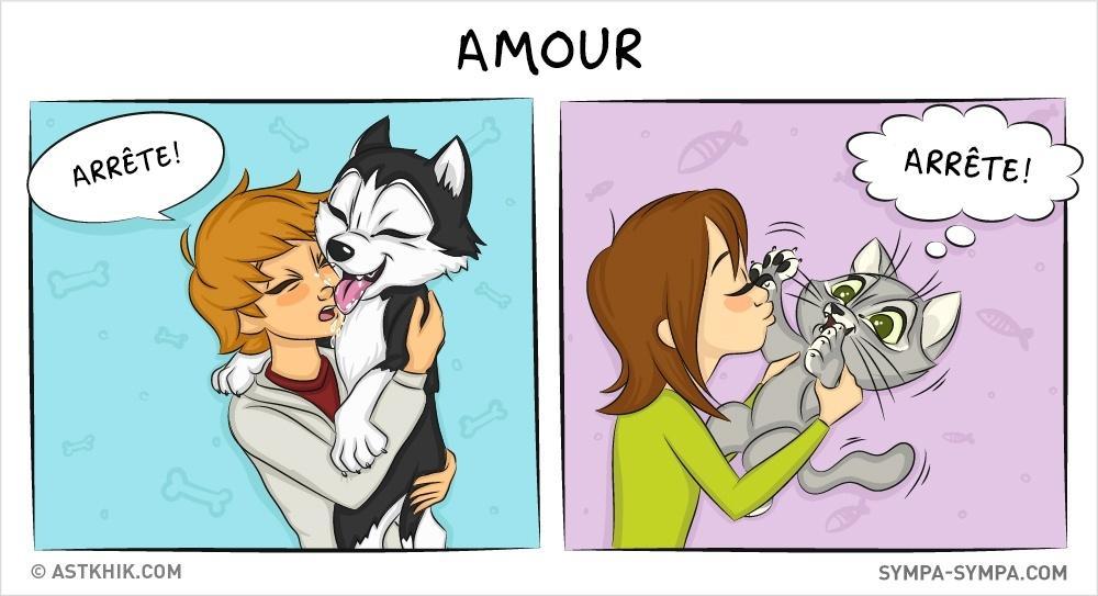 différences entre le chien et le chat