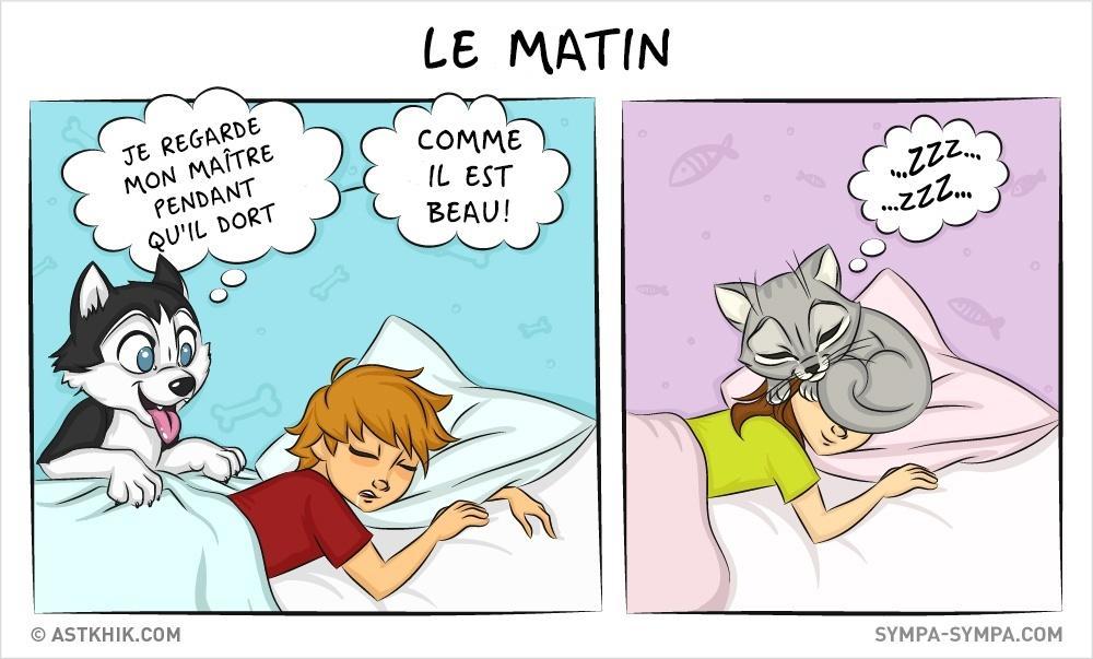 différences entre les chiens et les chats