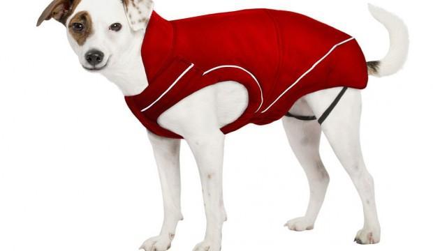 Quel manteau choisir pour son chien ?