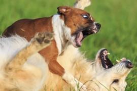 Comment réagir quand votre chien est attaqué lors d'une promenade ?