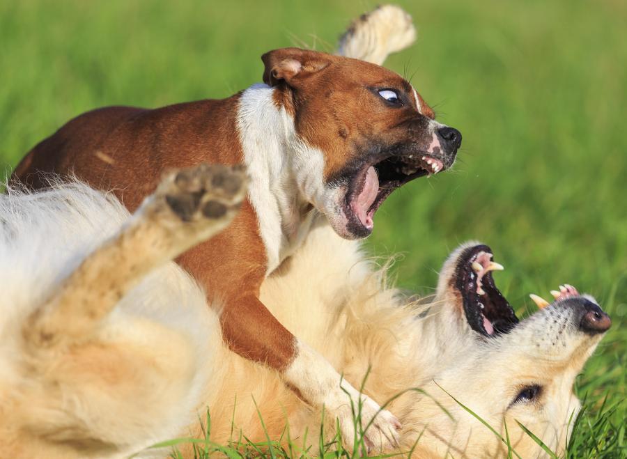 Comment réagir quand votre chien est attaqué lors d'une