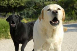 Comprendre le chien qui aboie tout le temps et le calmer