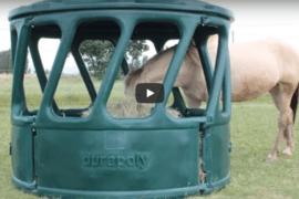 Comment nourrir votre cheval?